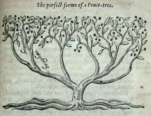 aha2_tree